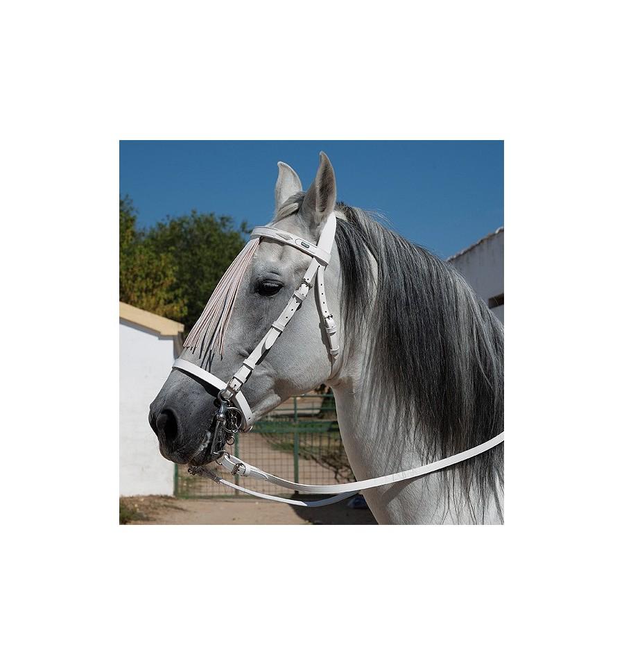 Cabezada blanca para caballo Marjoman
