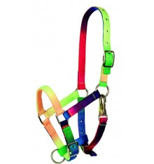 Coloured foal Halter