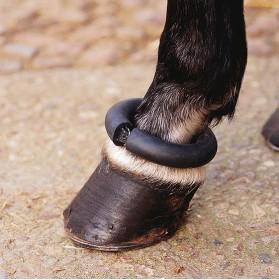 Protector donut Equus menudillo para establo