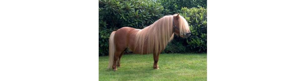Sudaderos pony