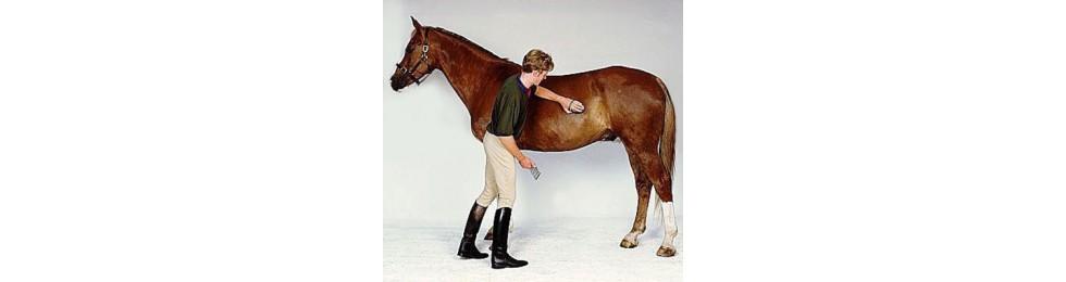Higiene del caballo